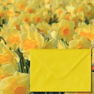 Daffodil Yellow Envelopes